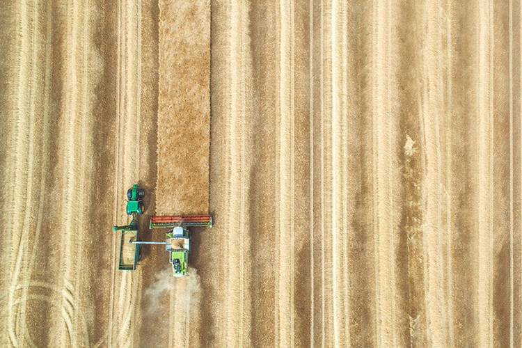 Investing in new solutions to fight food loss