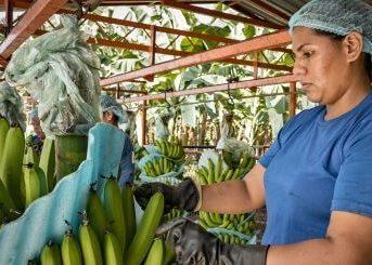 APM Terminals Helps Streamline Global Fruit Company's Logistics 1