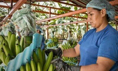 APM Terminals Helps Streamline Global Fruit Company's Logistics 5