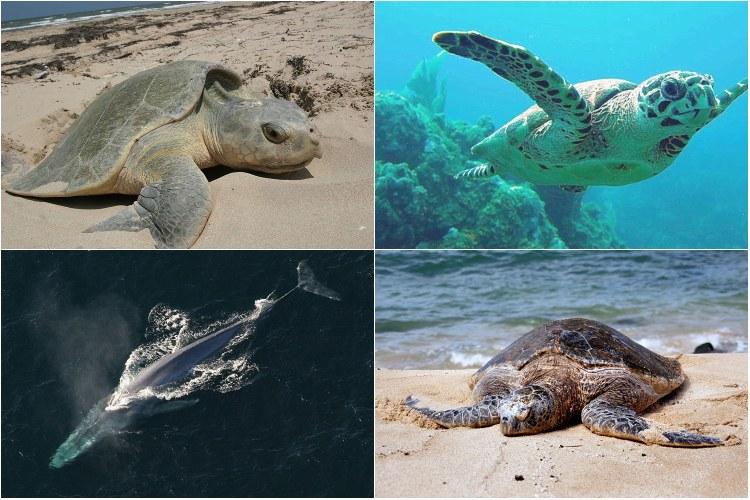 Endangered Ocean Species and Marine Animals