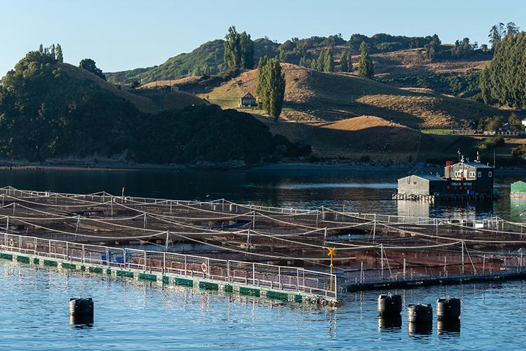 Career In Aquaculture
