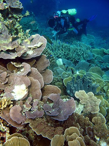 Coal reef of Karimunjawa